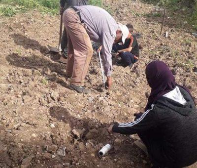 زراعة أشتال العنب في رنتيس